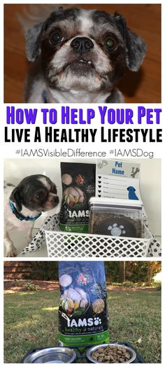 #Ad How to keep your pet healthy with IAMS™ @IAMS @walmart  #IAMSVisibleDifference #IAMSDog http://www.southernfamilyfun.com/keep-your-pet-healthy/