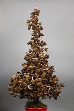 Du möchtest dieses Jahr deinen Tannenbaum aus Bucheckern für Weihnachten basteln. Hier habe ich die Anleitung für dich.  #bucheckern #basteln #weihnachten #weihnachtsdeko #weihnachtenbasteln #tannenbaumbasteln