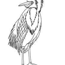 A Singing Nightingale Bird Coloring Page | Download Free A Singing  Nightingale Bird Coloring Page For Kids | Best Coloring Pages | Nightingale  Coloring ...