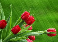 lluvia y flores - Buscar con Google