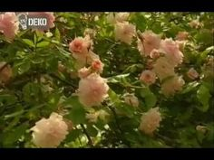 rózsametszés - http://gazigazito.hu