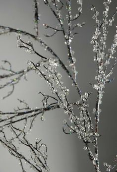 must do this for winter. How to make Iced Branches  #Christmas