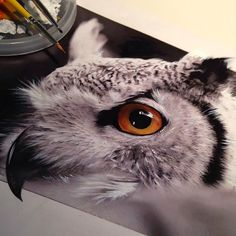 Believe it or not This is Color Pencil art by Karla Mialynne