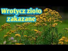 100. Wrotycz zioło zakazane kopia ten film został skasowany - YouTube Natural Remedies, Medical, Herbs, Health, Nature, Plants, Youtube, Allergies, Naturaleza
