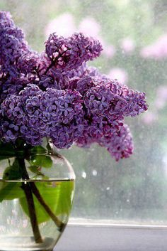 Mom loved lilacs and now their fragrance reminds me of her.