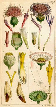 El Rincón Vintage de Karmela: El maravilloso encanto de las láminas con ilustraciones botánicas.