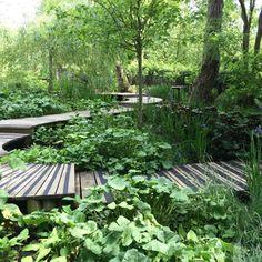 lovely oak boardwalk over a bog garden in this very large Buckinghamshire garden designed by me & built by Rob Jones @ The Garden Design Co Ltd Bog Garden, Herb Garden Design, Small Garden Design, Shade Garden, Patio Design, Dream Garden, Garden Paths, Rain Garden Design, Vegetable Garden