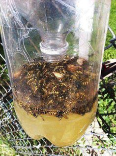 DIY BEE TRAP For those who have bees, near the house, all summer long. Fill container with vinegar, sugar and salt, to trap wasps...huh! Did not know that! 1 - Cut a coke or pop 2L bottle about 1/3 of the way down, 2 - Turn the top upside down and tape it along the top edge. 3 - Fill with the mixture and see what you catch.