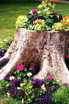If you have tree stumps in your garden, plant some colorful flowers in and around them.