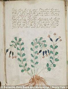 botanist studied the plants illustrated in the Voynich manuscript, pictured. He claims at least 37 of these 303 plants would have gro. Voynich Manuscript, Medieval Manuscript, Codex Seraphinianus, Alchemy Art, Old Maps, Sketchbook Inspiration, Book Of Shadows, 15th Century, Learn To Draw