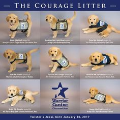 The Courage Litter has been named! Mr Light, Light Blue, Christopher Blue, Flight Nurse, Green Name, Blue Names, Service Dogs, Army, Teddy Bear