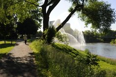A soothing trail along the Thames River in London Ontario.  A beautiful place to walk and get away from the city while still in the city.
