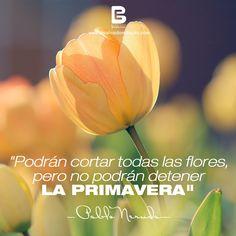 """""""Podrán cortar todas las flores, pero no podrán detener la primavera"""" —Pablo Neruda—   Visítanos: http://www.elsalvadorebooks.com"""