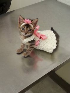 A kitty cat that looks like a flower girl.