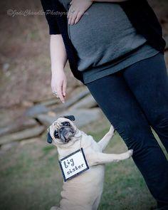 I love pugs! Pugs, Rainbow, My Love, Photography, Animals, My Boo, Fotografie, Animales, Photograph