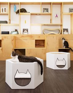 First Design Cat Café in NYC                                                                                                                                                                                 More