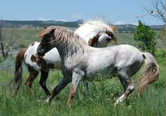From the Black Hills Wild Horse Sanctuary