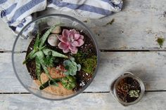How to Make a Terrarium (and Keep it Alive) on Food52