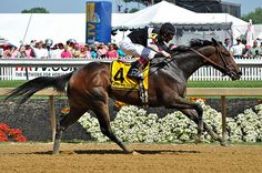 Millionreasonswhy....Sagamore Farm....Black Eye Susan Day@Pimlico May 18, 2012....photo by me(Elaine Kucharski)