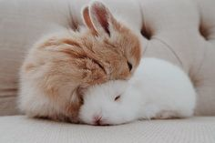 Cute Furry Animals List over Cute Animals For Backgrounds; Cute Baby Animals Colouring Pictures when Cute Animals Cartoon Characters Baby Animals Super Cute, Cute Baby Bunnies, Cute Little Animals, Cute Funny Animals, Cute Dogs, Funny Cats, Baby Animals Pictures, Cute Animal Photos, Cute Pictures