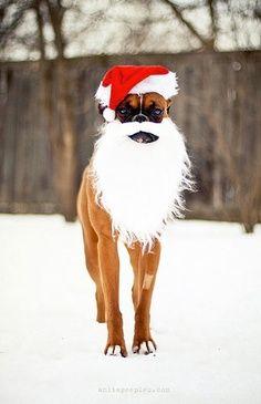 4 legged Santa