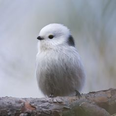 The cutest bird by Kim Abel / long tailed tit