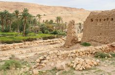 Mides Oasis, Tunisia  by Renee Vititoe on 500px