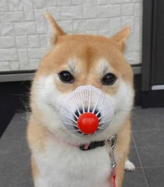 disordered:  u have disrespect shibe
