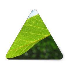 Closeup of walnut leaf lit by sunlight triangle sticker - craft supplies diy custom design supply special
