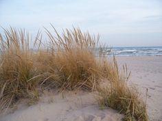 Dune Grass Marram Grass on the Beach