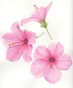 Hibiscus Flower Drawing, Hibiscus Tattoo, Hibiscus Flowers, Flower Art, Watercolor Cards, Watercolor Flowers, Watercolor Paintings, Simple Acrylic Paintings, Paintings I Love