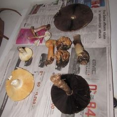 After you've picked your first few batches of mushrooms, and haven't landed in the hospital, you'll find the mushroom conversation branches into themes of field testing, drying, and alternate uses, such as medicines, dyes and crafts.