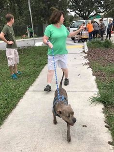 Saving Lives During Hurricane Irma - How Our Animal Community Worked Together to Protect Pets - Jacksonville Humane Society