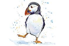 Puffin Studies – Hire an Illustrator