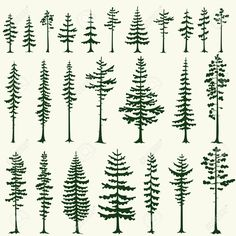 tall pine tree silhouette - Google Search
