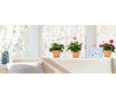 Vinilo para ventana VENTANA GERANIOS - Leroy Merlin Error Page, Merlin, Plants, Geraniums, Windows, Plant, Planets