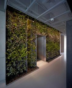 Bringing the outdoors indoors at the office!