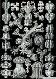 4 | Подборка иллюстраций Эрнста Геккля в отличном качестве. Часть1 | ARTeveryday.org