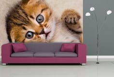 #Fototapeta z #małym #kotkiem. Idealna do salonu!