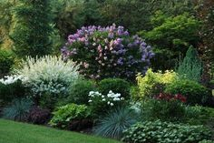 short bushes for front of house - Google Search