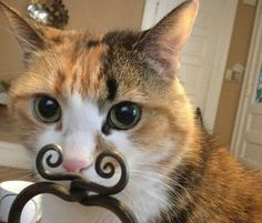 Katter vs. inredning - Inredningsvis http://inredningsvis.se/katter-vs-inredning/