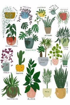 Houseplants list / fine art print of my illustration - Houseplants -fine art pr. - Houseplants list / fine art print of my illustration – Houseplants -fine art pr… Houseplants - House Plants Decor, Plant Decor, Bedroom With Plants, Plantas Indoor, Decoration Plante, Peace Lily, Plant Illustration, Medical Illustration, Houseplants