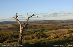 Amakhala Game Reserve – Travel Guide, Map & More! Game Reserve, Free Travel, Travel Guide, South Africa, Safari, Scenery, Wildlife, Map, Games