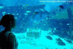 Maravillada con el mundo que hay bajo el agua en el S.E.A. Acuario de #Singapur catalogado como el acuario más grande del mundo por sus 45 millones de litros de agua salada. #acuario #aquarium #Singapore #Asia #travel #traveling #Traveler #viaje #viajo #viagem #viaggi #viajar #voyage #voyager #travelingram #travelblog #blogger #phototravel #sea #Travelblogger #LosviajesdeMary #photoshoot by losviajesdemary