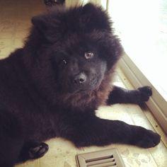 My puppy dog Bradley