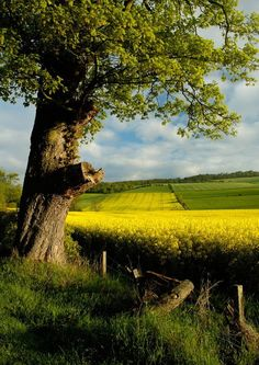 A Place in the Country.. I would be thrilled if my future home had a view like this. Open skies