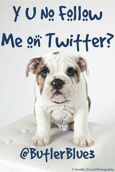 Future Butler University Mascot, ButlerBlue3 (a.k.a. Trip) @Butler Blue III on Twitter