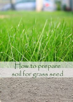 Growing Grass From Seed, Planting Grass Seed, Growing Seeds, Garden Soil, Lawn And Garden, Planting Seeds, Garden Care, How To Grow Grass, Herbs Garden