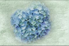 Nothing says Summer like hydrangeas!