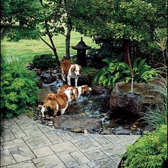 I will ALWAYS have dogs! They are awesome and having a dog friendly yard is a must, but it also has to be human friendly.